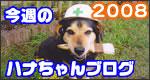 行橋の塗装屋さん<br>ハナちゃんブログ2008