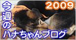 行橋の塗装屋さん<br>ハナちゃんブログ2009